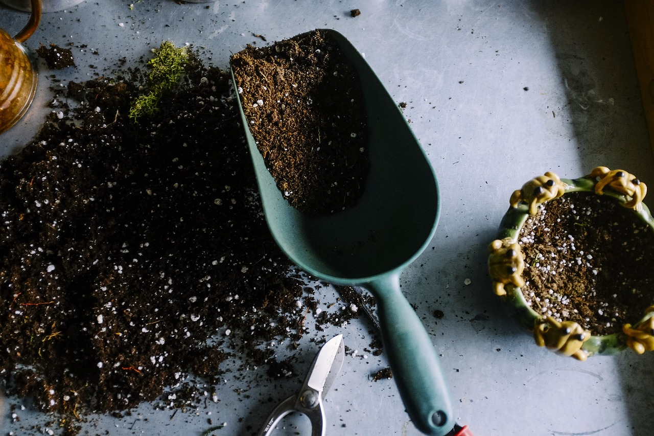how to clean bugs out of potting soil