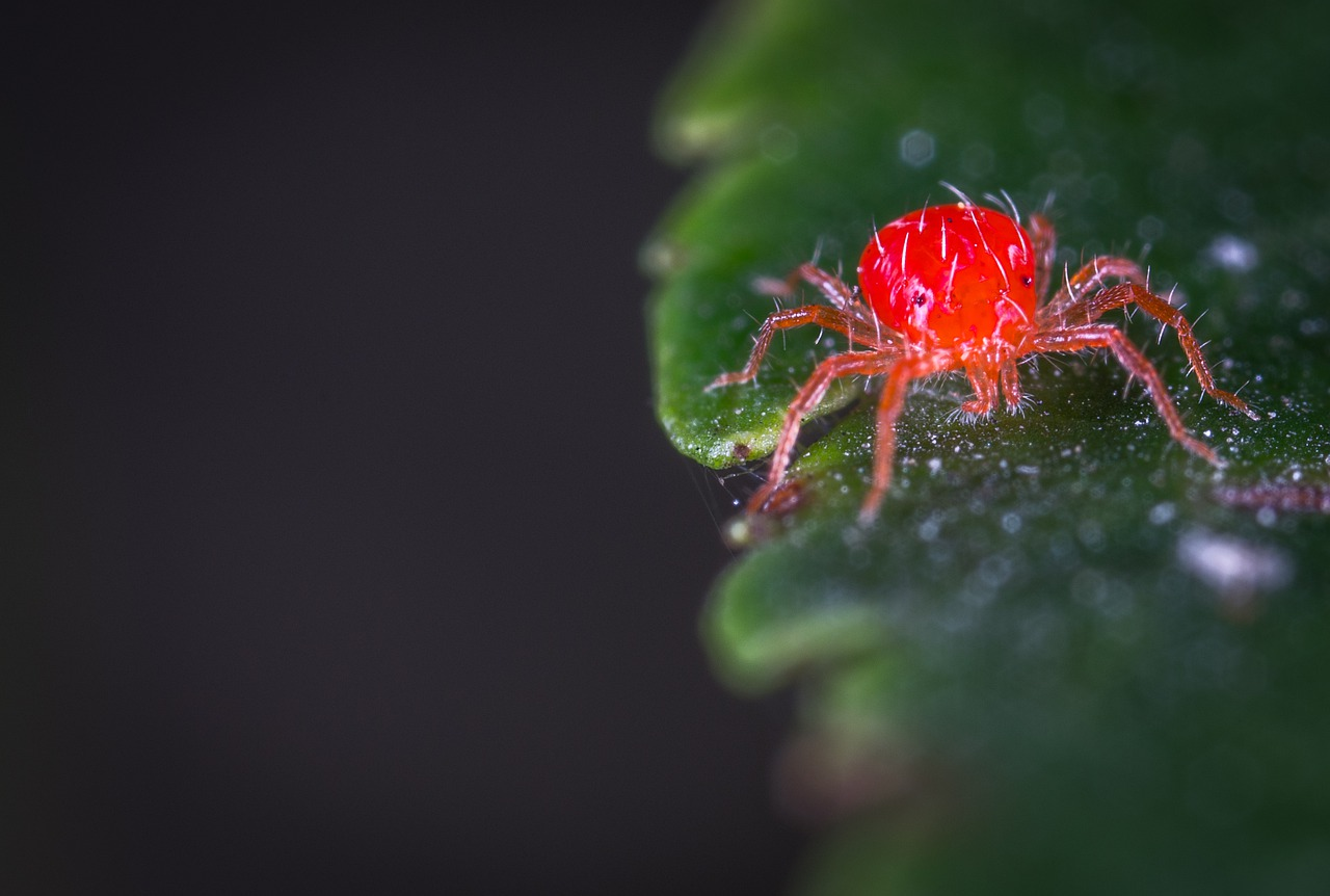 how to remove spider mites and eggs from house plant potting soil
